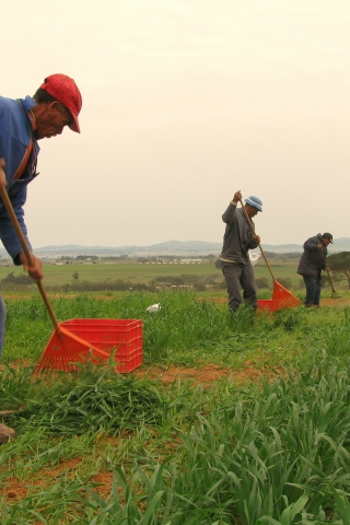 What are the pathways to developing climate-smart agriculture in the Western Cape?
